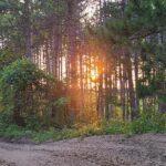 Coatv atv club trails